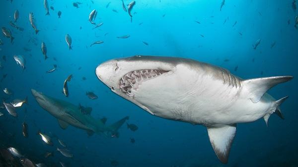 Poker-Shark-or-Poker-Fish-You-decide.jpg