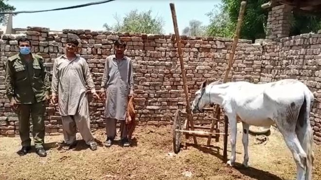 Donkey and 8 others arrested for gambling in Pakistan